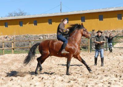 caballo3