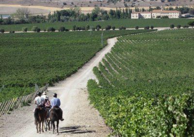 ruta-del-vino-2